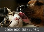 Threadul cu  Wallpapere-why-we-love-cats-dogs-2560x1600.jpg