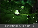 Threadul cu  Wallpapere-widescreen-macro-droplets-1920-1080-hd-wallpaper.jpg