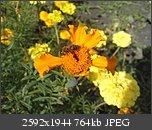 Poze facute cu telefoanele mobile-p120909_16.020002.jpg