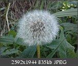 Poze facute cu telefoanele mobile-p120909_16.070001.jpg