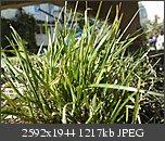 Poze facute cu telefoanele mobile-p231009_13.270001.jpg