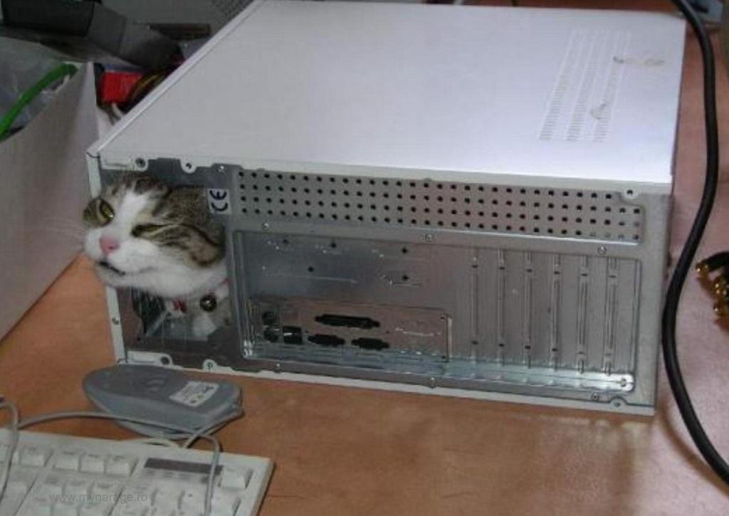 Фото на тему Прикольное видео про кошек бесплатно.